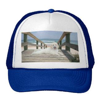 Poodle On Boardwalk Hat