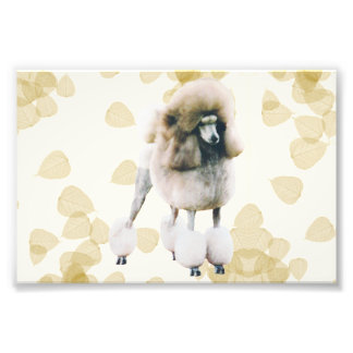 Poodle on Tan Leaves Photo Print