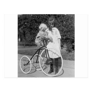 Poodle Perch, 1913 Postcard