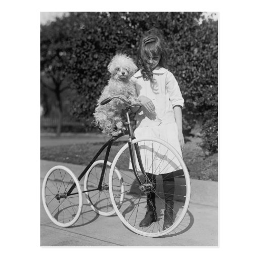 Poodle Perch, 1913 Post Cards