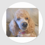 Poodle Pet Lovers Stickers