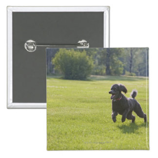 Poodle playing frisbee 15 cm square badge