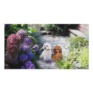 Poodle Poster Hydrangeas