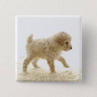 Poodle Puppy 15 Cm Square Badge