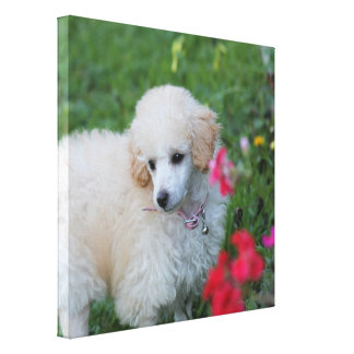 Poodle puppy dog gallery wrap print