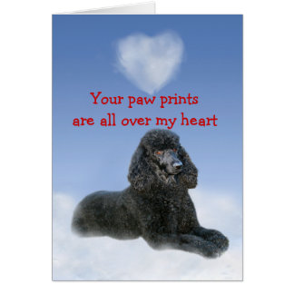 Poodle Puppy Love Card