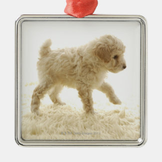 Poodle Puppy Silver-Colored Square Decoration
