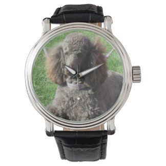 Poodle Watch