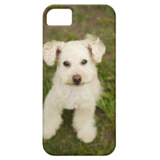 Poodle (white) case for the iPhone 5