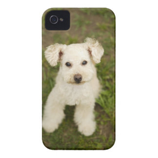 Poodle (white) iPhone 4 cases