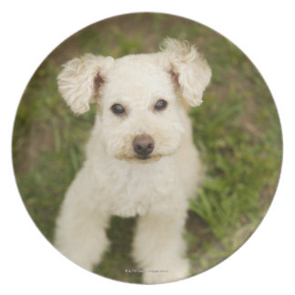 Poodle (white) plate