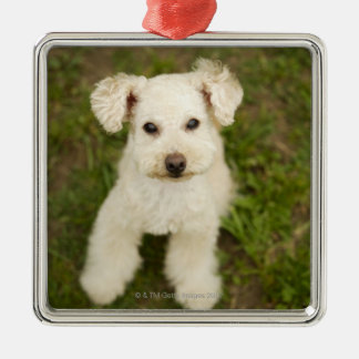 Poodle (white) Silver-Colored square decoration