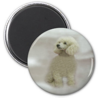 Poodles Are Heavenly Magnet