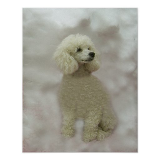 Poodles Are Heavenly Print