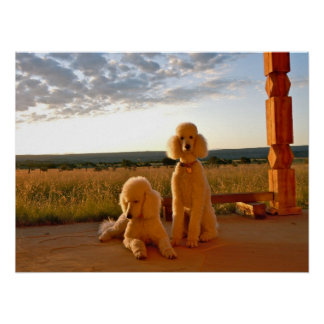 Poodles at Sunset Poster