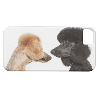 Poodles examining each other iPhone 5 cases