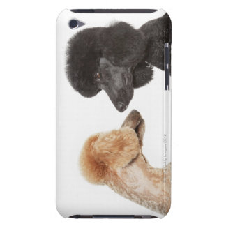 Poodles examining each other iPod touch cases