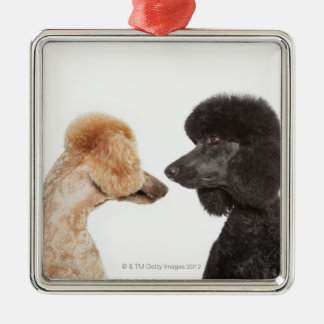 Poodles examining each other Silver-Colored square decoration