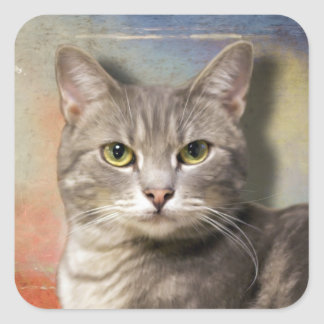 Pookie the Gray Cat Square Sticker