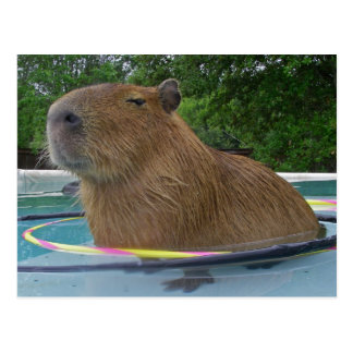Pool Capybara Postcard