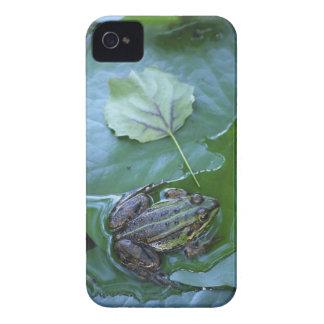 Pool Frog, Amperauen, Germany Case-Mate iPhone 4 Case