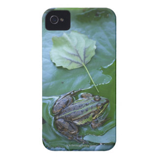 Pool Frog, Amperauen, Germany Case-Mate iPhone 4 Case