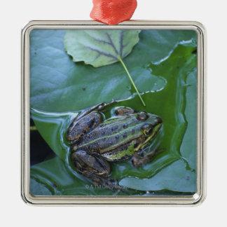 Pool Frog, Amperauen, Germany Christmas Ornament