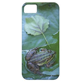 Pool Frog, Amperauen, Germany iPhone 5 Covers