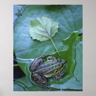 Pool Frog, Amperauen, Germany Poster