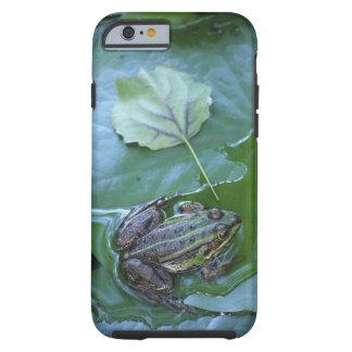 Pool Frog, Amperauen, Germany Tough iPhone 6 Case