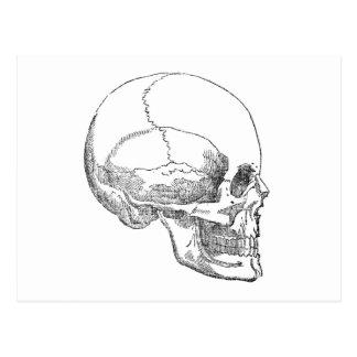 Poor Yorick Skull Postcard