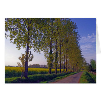 poplars in Brittany France Card