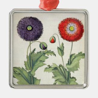 Poppies: 1.Papaver flore multiplici incarnato; 2.P Christmas Ornament