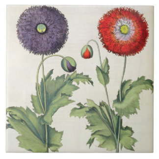 Poppies: 1.Papaver flore multiplici incarnato; 2.P Large Square Tile