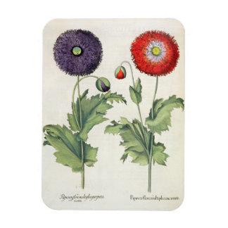 Poppies: 1.Papaver flore multiplici incarnato; 2.P Vinyl Magnet