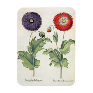 Poppies: 1.Papaver flore multiplici incarnato; 2.P Rectangular Photo Magnet