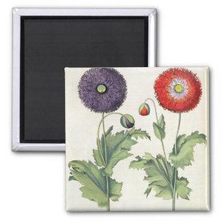 Poppies: 1.Papaver flore multiplici incarnato; 2.P Square Magnet