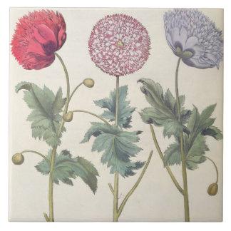 Poppies: 1.Papaver multiplex albumoris rubicundis; Tile