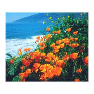 Poppies along the Pacific Coast near Big Sur Canvas Print