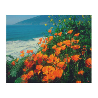 Poppies along the Pacific Coast near Big Sur Wood Wall Art