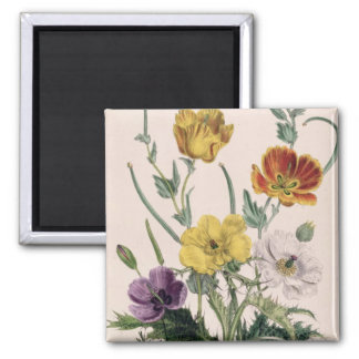 Poppies and Anemones Magnet