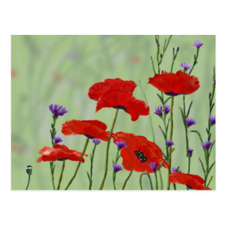 Poppies and Bachelor Buttons Postcard
