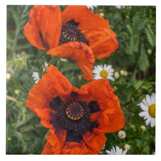 Poppies and daisies ceramic photo tile