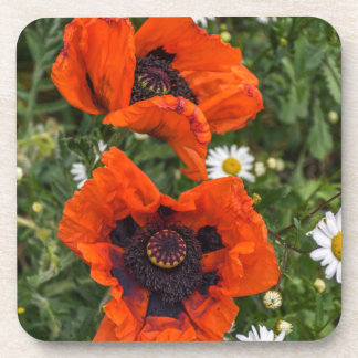 Poppies and daisies hard plastic coasters