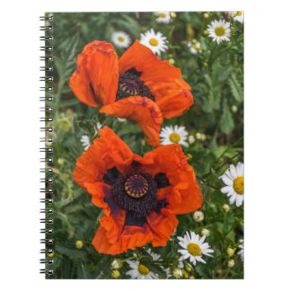 Poppies and daisies notebook