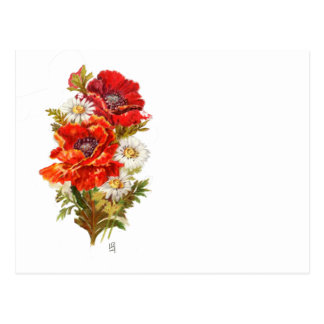Poppies and Daisies Postcard