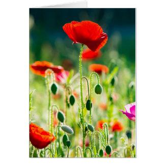 Poppies at Dawn Card