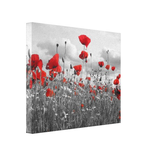 Poppies Black, White and Red Stretched Canvas Prints