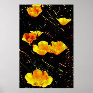 Poppies Canvas Prints Print
