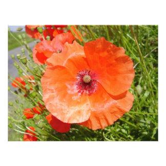 Poppies - Coquelicots Prospectus En Couleur